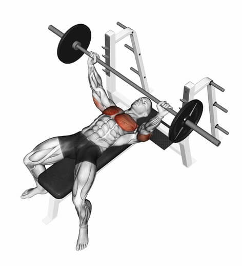 Bankdrücken (Engl. Bench Press)